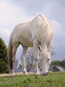 29_le_cheval_blanc